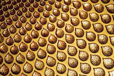 Photograph - Gold No. 5-1 by Sandy Taylor