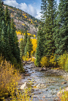 Photograph - Gold On Henson Creek by Jim McCain