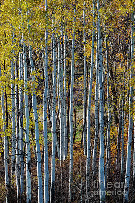 Photograph - Gold Over White by Mike Dawson