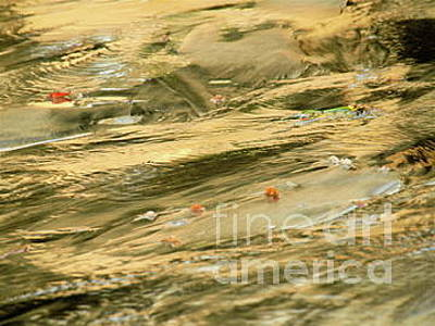 Photograph - Gold Shore by Mary Kobet