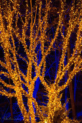 Photograph - Gold Tree On Blue 5679 by Dan Beauvais