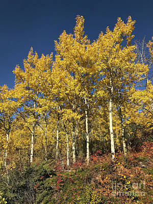 Clouds - Gold trees by Neil Speers