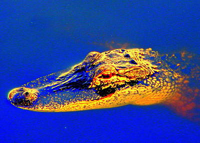 Photograph - Golden Alligator by T Guy Spencer