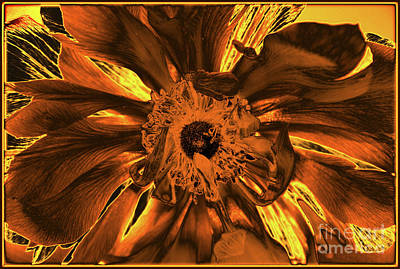 Photograph - Golden Anemone by Jolanta Anna Karolska