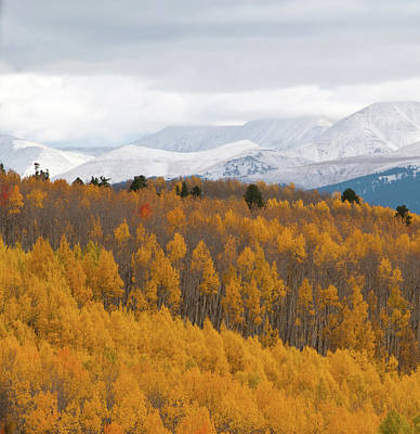 Photograph - Golden Aspen And Snow Covered Mountains by Cascade Colors