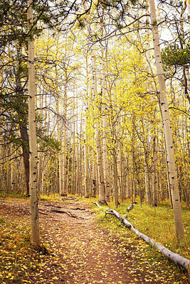 Photograph - Golden Aspen Trail by Marilyn Hunt
