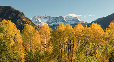 Photograph - Golden Aspens And Fresh Snow by Loree Johnson