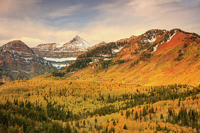 Photograph - Golden Aspens On Timp by Johnny Adolphson