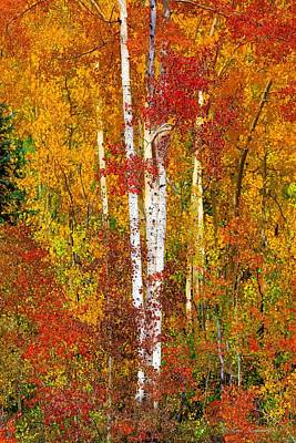 Photograph - Golden Aspens Vertical by Kay Kochenderfer