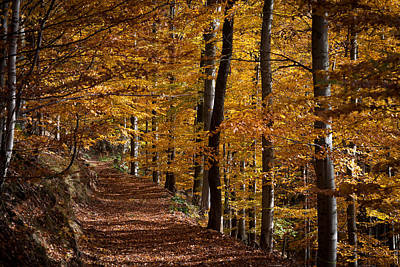 Golden Autumn Art Print by Andreas Levi