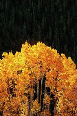 Aspen Leaf Photograph - Golden Autumn by Andrew Soundarajan