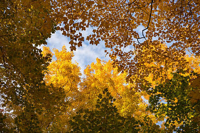 Photograph - Golden Autumn Canopy - A Window To The Sky Horizontal by Georgia Mizuleva