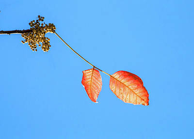 Photograph - Golden Autumn by Deb Buchanan