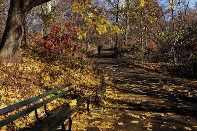 Photograph - Golden Autumn Droppings by Cornelis Verwaal