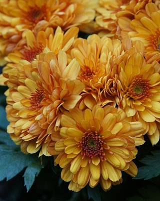 Photograph - Golden Autumn Mums by Patricia Strand