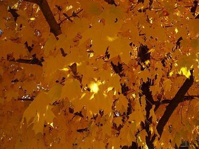Golden Autumn Art Print by Stephen Davis
