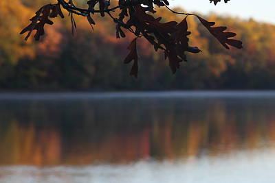 Photograph - Golden Autumn by Vadim Levin