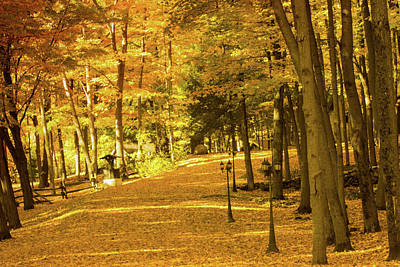 Photograph - Golden Avenue by James Canning