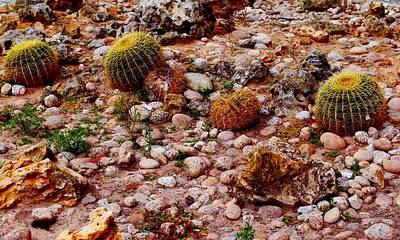 Photograph - Golden Barrel Cactus by Dora Hathazi Mendes