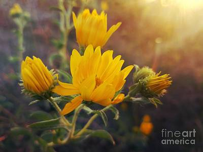 Photograph - Golden Beauties by Maria Urso