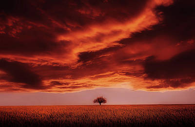 Rural Art Mixed Media - Golden Beauty by Pixabay