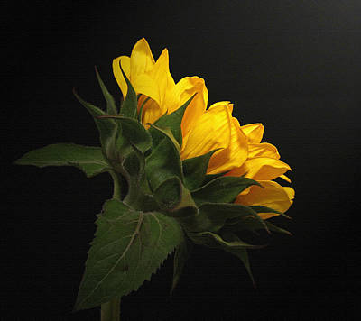 Art Print featuring the photograph Golden Beauty by Judy Vincent