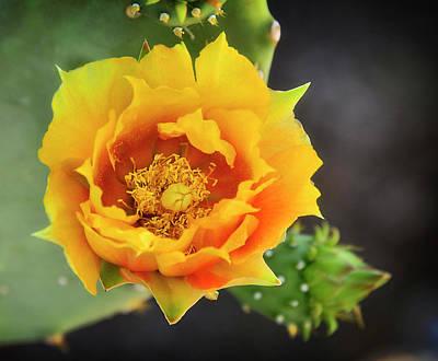 Yellow Cactus Flower Photograph - Golden Beauty  by Saija Lehtonen