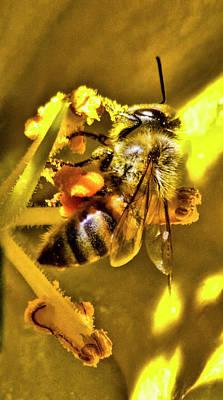 Golden Bee Original by Arthur Bohlmann