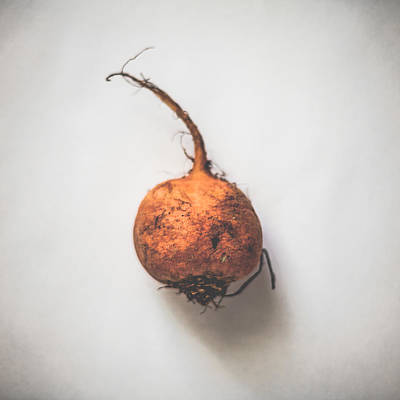 Fall Photograph - Golden Beetroot by Kate Morton