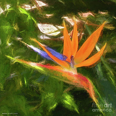Golden Bird Of Paradise Art Print