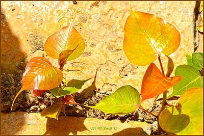 Photograph - Golden Bodhi Leaves by Sonali Gangane