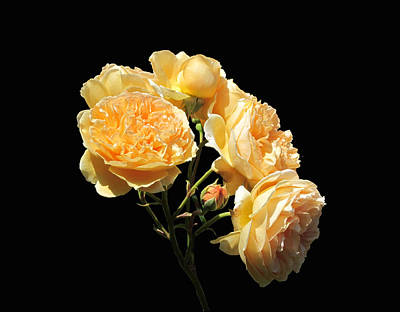 Photograph - Golden Bouquet - Roses On Black by MTBobbins Photography