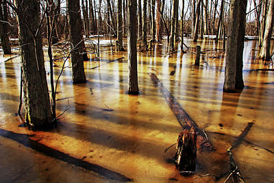 Photograph - Golden Brown Frozen Pond by Debbie Oppermann