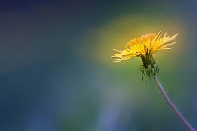 Photograph - Golden  by Bulik Elena