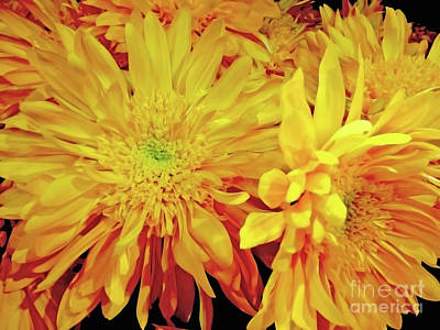 Photograph - Golden Burst by Jasna Dragun