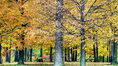 Photograph - Golden Canopy by Leslie Montgomery