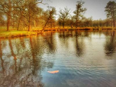 Mixed Media - Golden Carp by Abbie Shores