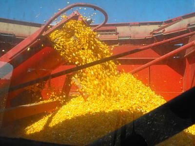 Golden Corn Art Print