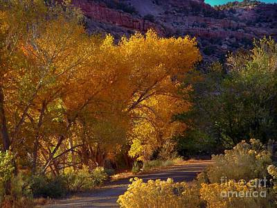 Digital Art - Golden Cottonwoods by Annie Gibbons