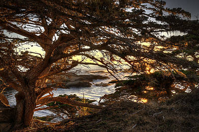 Photograph - Golden Cypress by Robert Melvin