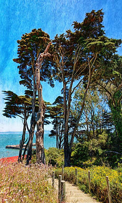 Photograph - Golden Cypress Trees by John M Bailey