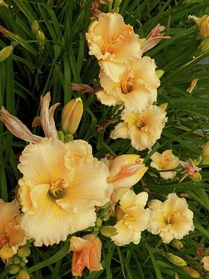 Photograph - Golden Day Lilies by Georgia Hamlin