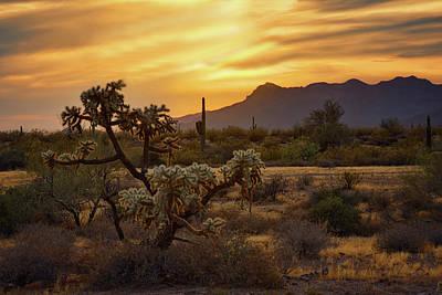 Photograph - Golden Desert Evening  by Saija Lehtonen