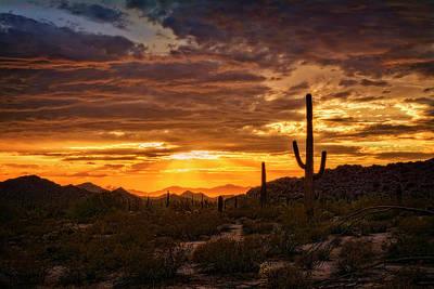 Photograph - Golden Desert Sunshine  by Saija Lehtonen