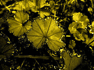 Photograph - Golden Dew by Laura Greco