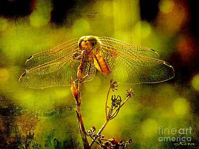 Photograph - Golden Dragonfly by Kira Bodensted