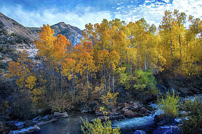 Photograph - Golden Dream Along Bishop Creek by Lynn Bauer