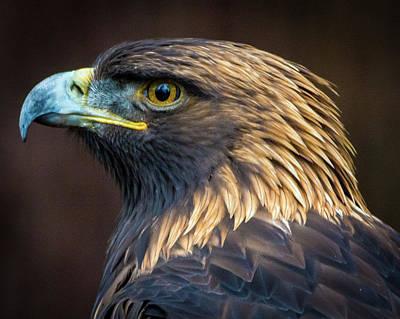 Golden Eagle 2 Art Print