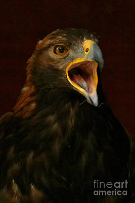 Photograph - Golden Eagle Calling - Portrait by Sue Harper