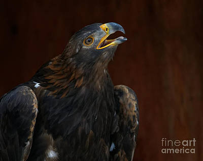 Photograph - Golden Eagle Calling To The Sun by Sue Harper